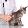Ветеринарные клиники в Переяславке